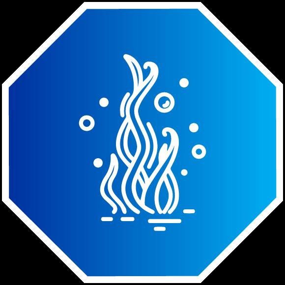Extracción y Recolección de Algas